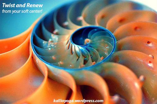 spiral shell2